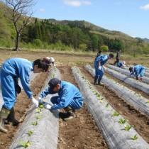 農業体験学習